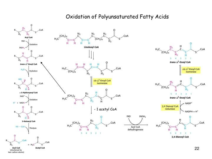 Oxidation of Polyunsaturated Fatty Acids