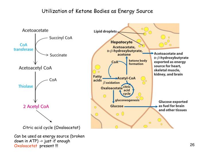 Utilization of Ketone Bodies as Energy Source