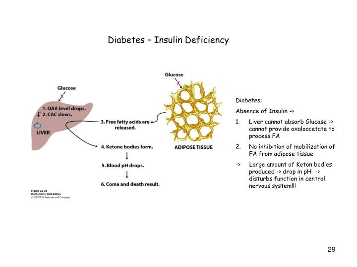 Diabetes – Insulin Deficiency