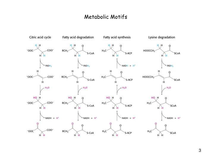Metabolic Motifs