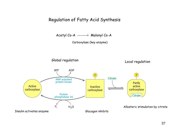 Regulation of Fatty Acid Synthesis