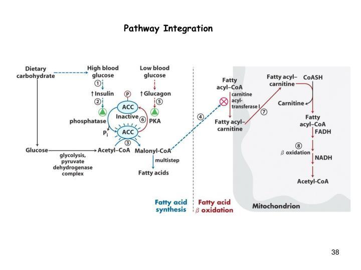 Pathway Integration