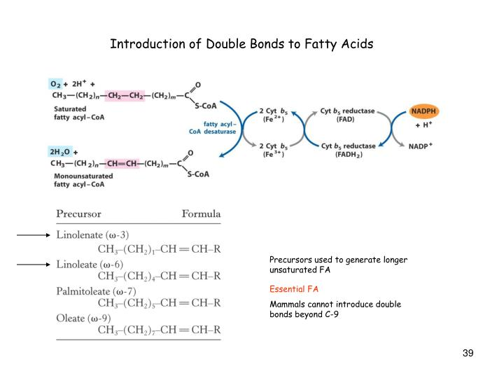 Introduction of Double Bonds to Fatty Acids
