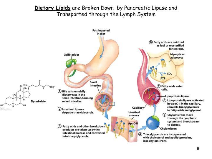Dietary Lipids
