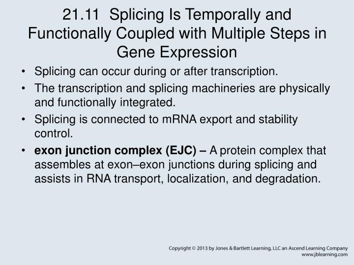 21.11  Splicing Is Temporally and Functionally Coupled with Multiple Steps in Gene Expression