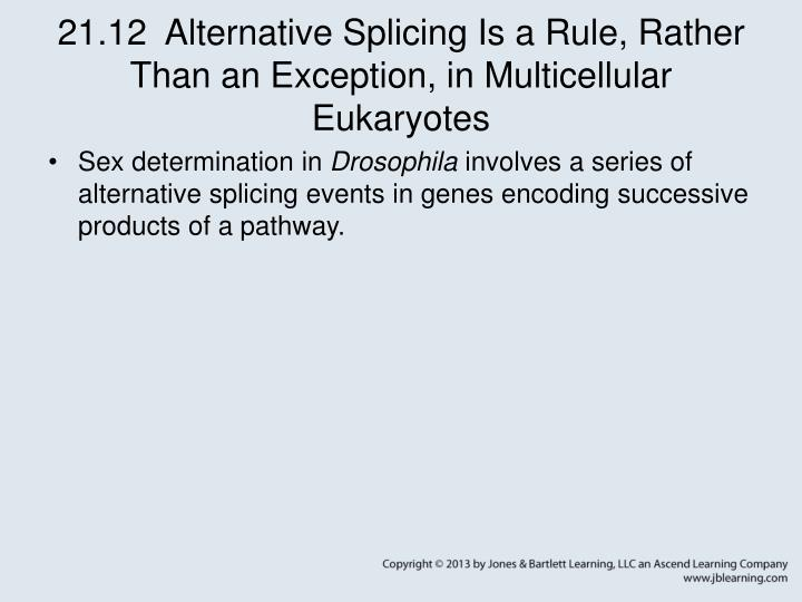 21.12  Alternative Splicing Is a Rule, Rather Than an Exception, in Multicellular Eukaryotes
