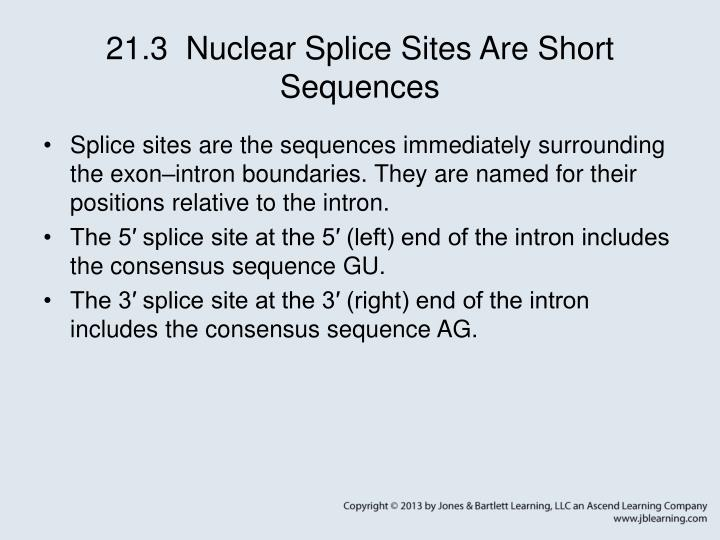 21.3  Nuclear Splice Sites Are Short Sequences