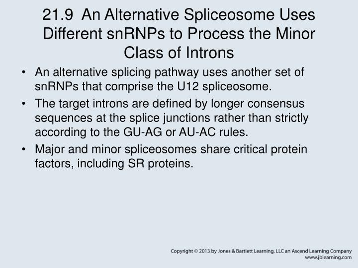 21.9  An Alternative Spliceosome Uses Different snRNPs to Process the Minor Class of Introns