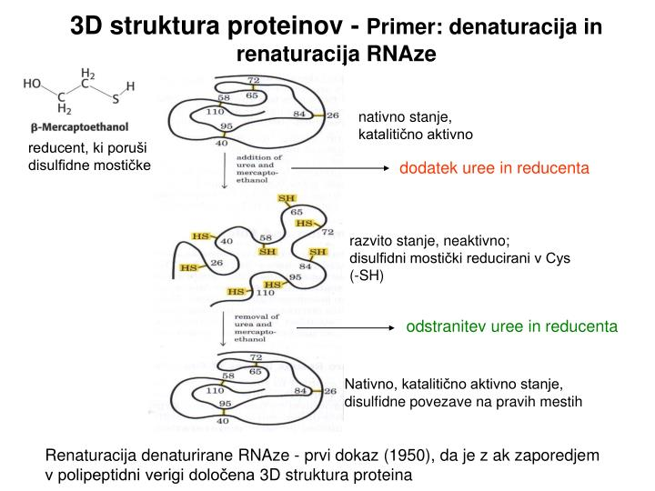 3D struktura proteinov -