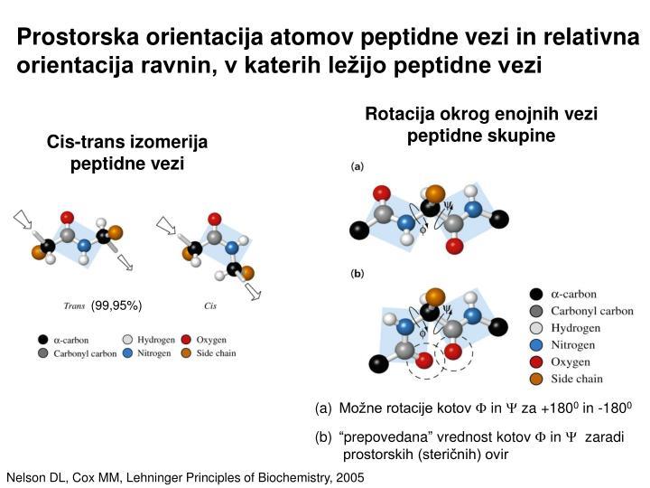 Prostorska orientacija atomov peptidne vezi in relativna