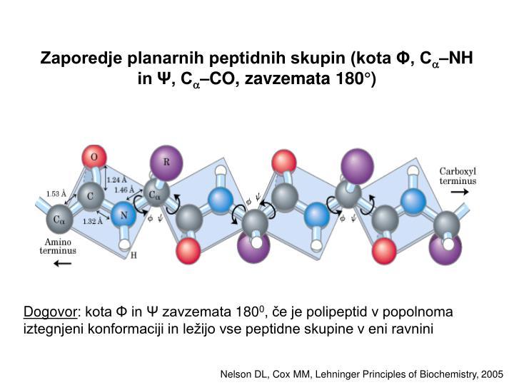 Zaporedje planarnih peptidnih skupin (kota Φ, C