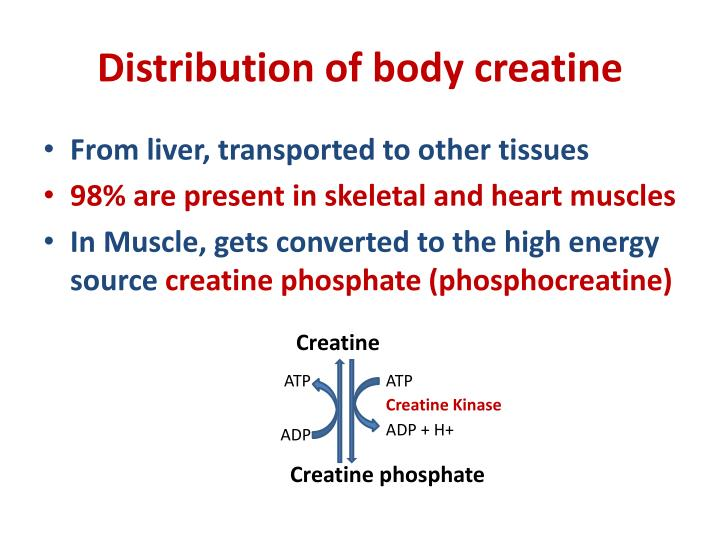 Distribution of body creatine