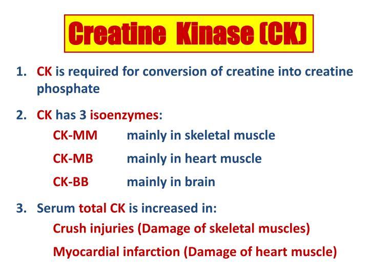Creatine  Kinase (CK)