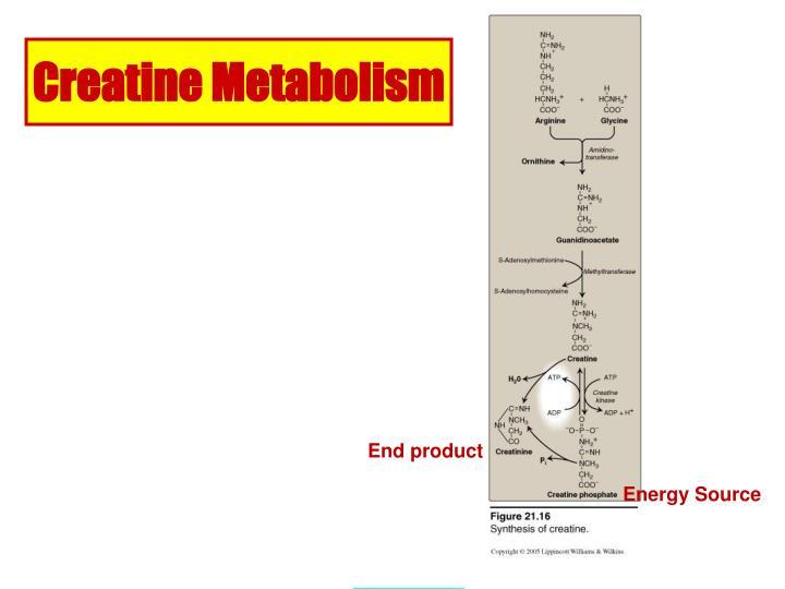 Creatine Metabolism