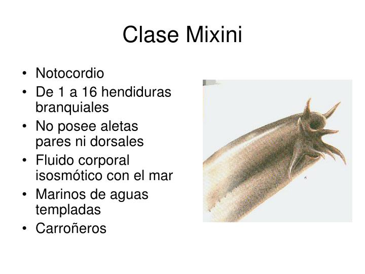 Clase Mixini