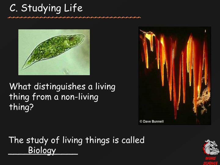 C. Studying Life