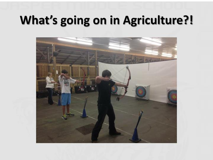 What's going on in Agriculture?!