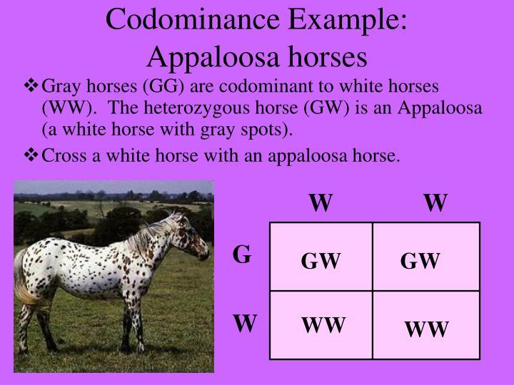 Codominance Example: