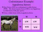 codominance example appaloosa horses