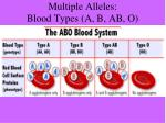 multiple alleles blood types a b ab o1