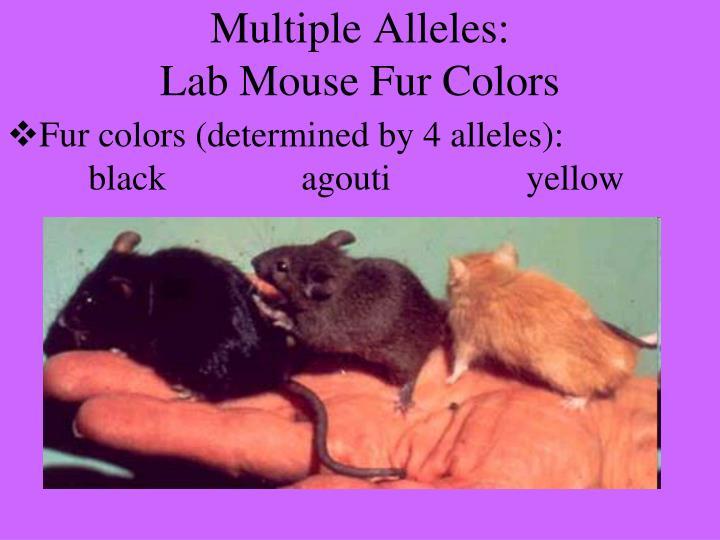 Multiple Alleles:
