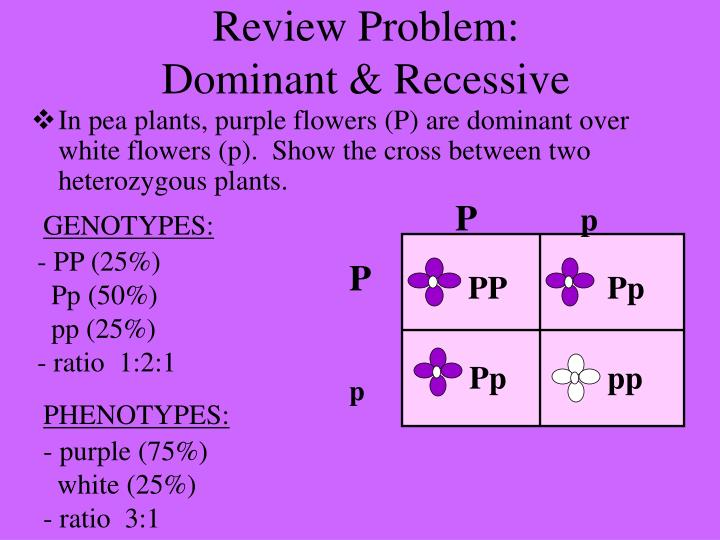 Review problem dominant recessive