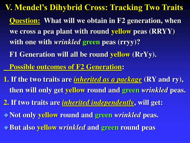 V. Mendel's Dihybrid Cross: Tracking Two Traits
