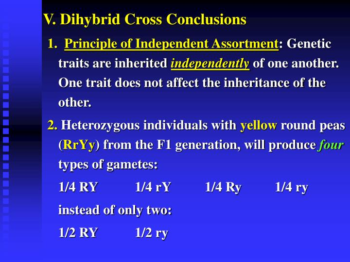 V. Dihybrid Cross Conclusions