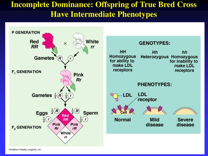 Incomplete Dominance: Offspring of True Bred Cross