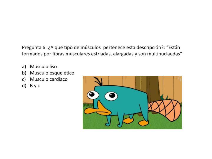 """Pregunta 6: ¿A que tipo de músculos  pertenece esta descripción?: """"Están formados por fibras musculares estriadas, alargadas y son multinuclaedas"""""""