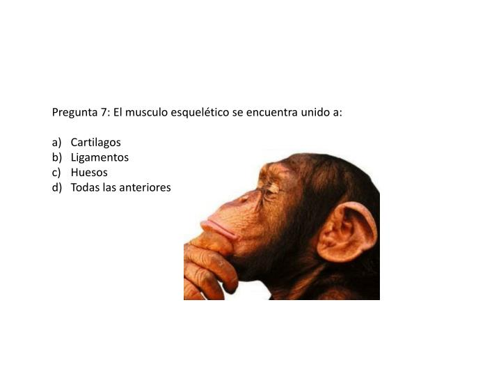 Pregunta 7: El musculo esquelético se encuentra unido a: