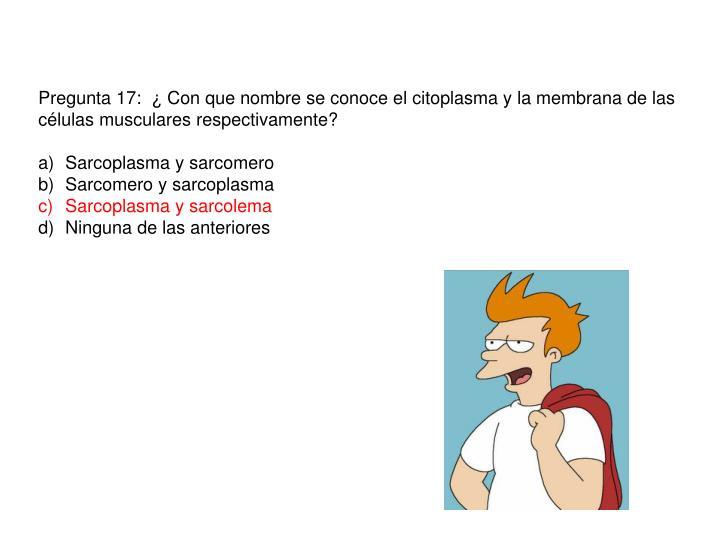 Pregunta 17:  ¿ Con que nombre se conoce el citoplasma y la membrana de las células musculares respectivamente?