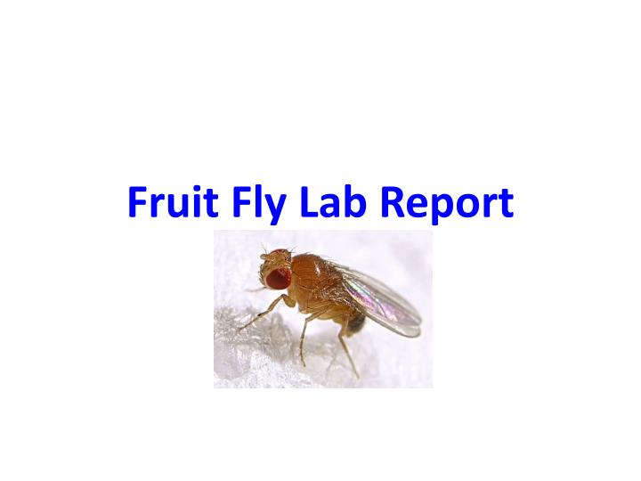 fly lab report What environmental factors trigger a fruit fly response □ background  fruit  fly cultures (approximately 30–40 fruit flies per lab group each day) • choice.