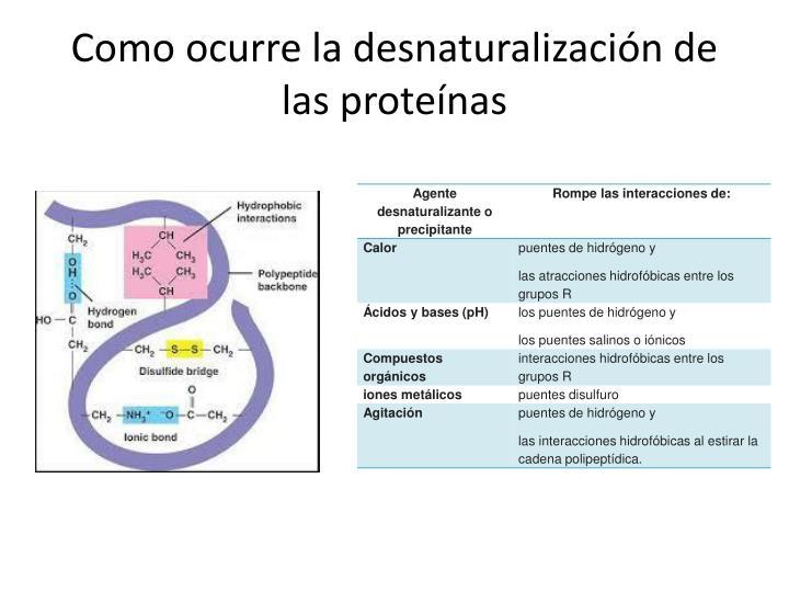 Como ocurre la desnaturalización de las proteínas