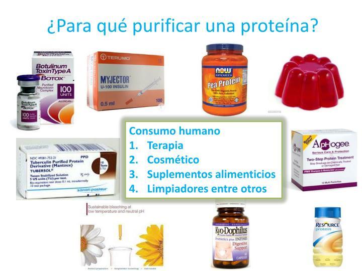 ¿Para qué purificar una proteína?
