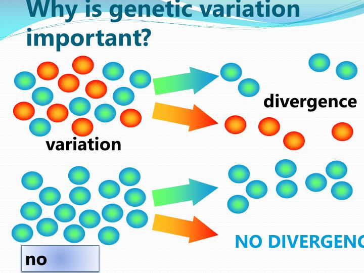 Why is genetic variation important?