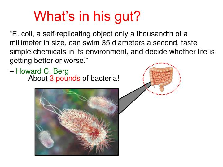 What's in his gut?