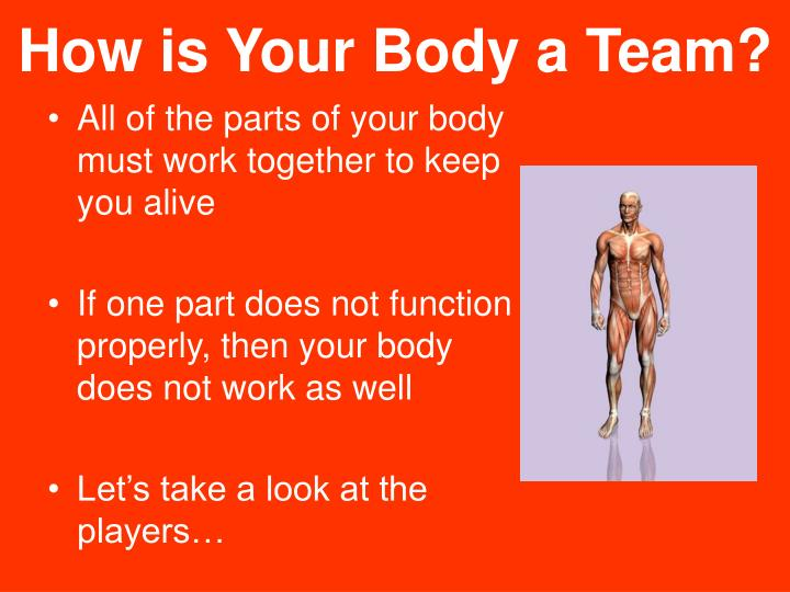 How is Your Body a Team?