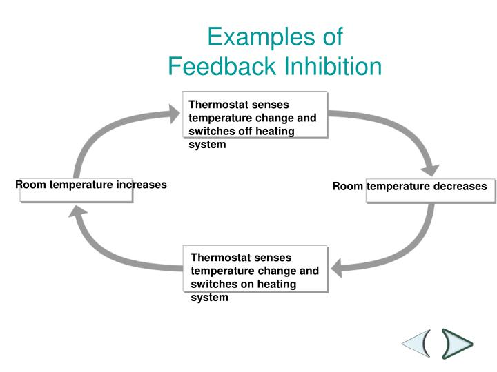 Examples of Feedback Inhibition