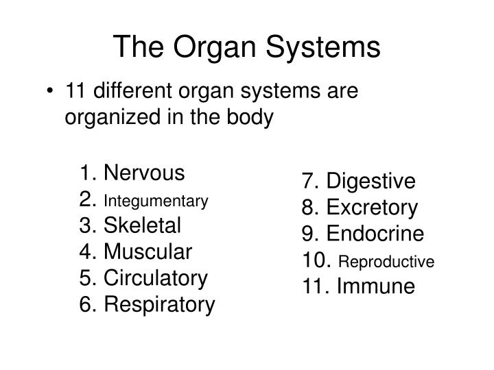 The Organ Systems