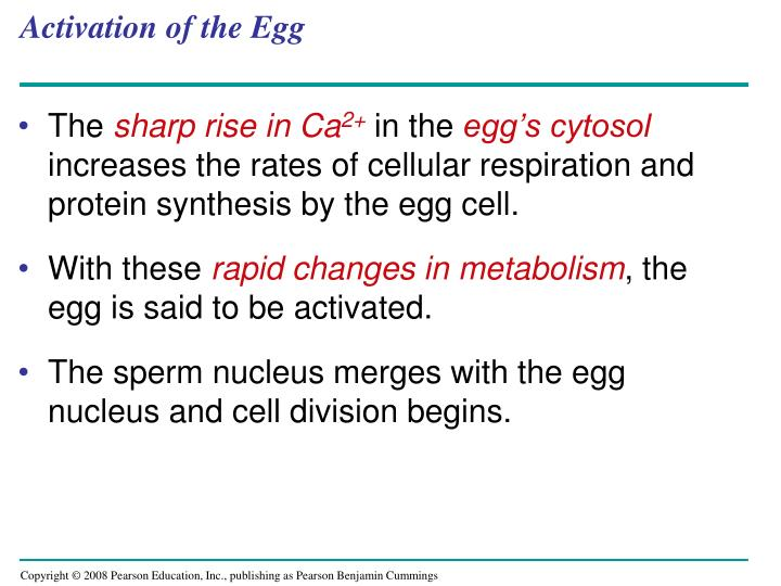 Activation of the Egg