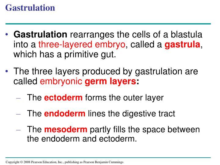 Gastrulation