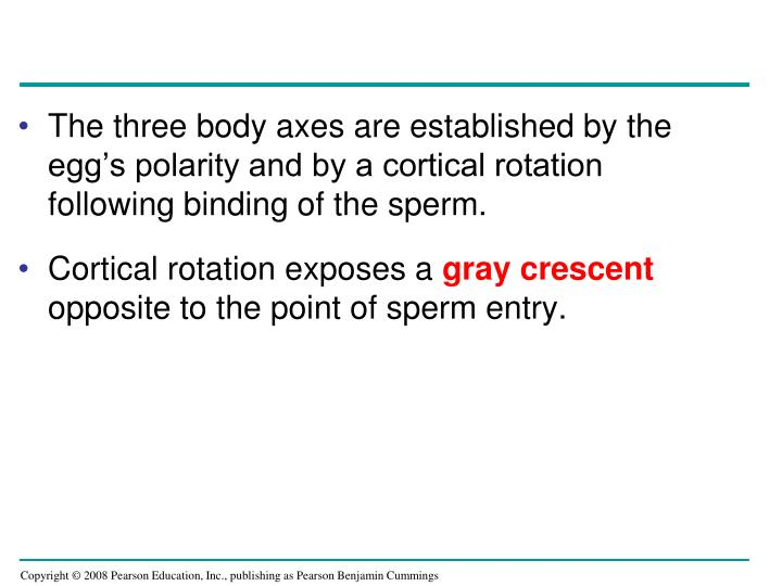 The three body axes are established by the egg's polarity and by a cortical rotation following binding of the sperm.