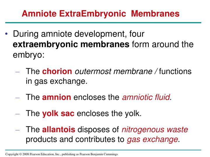 Amniote ExtraEmbryonic  Membranes