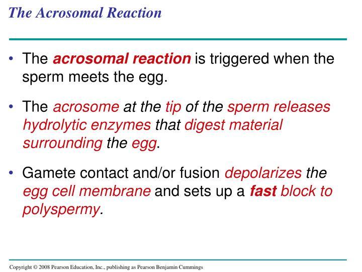 The Acrosomal Reaction