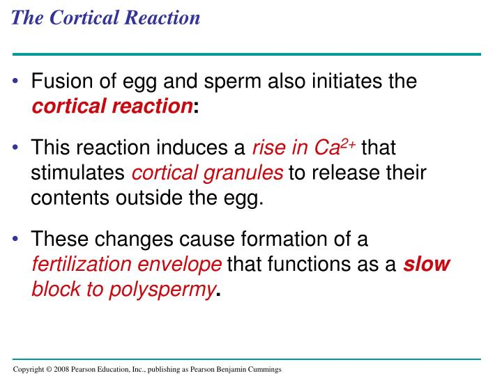 The Cortical Reaction