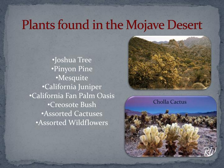 Plants found in the Mojave Desert