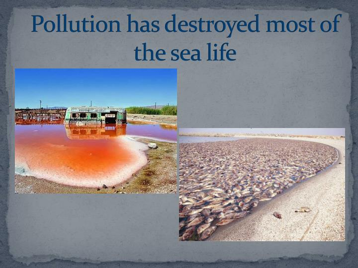 Pollution has destroyed most of the sea life