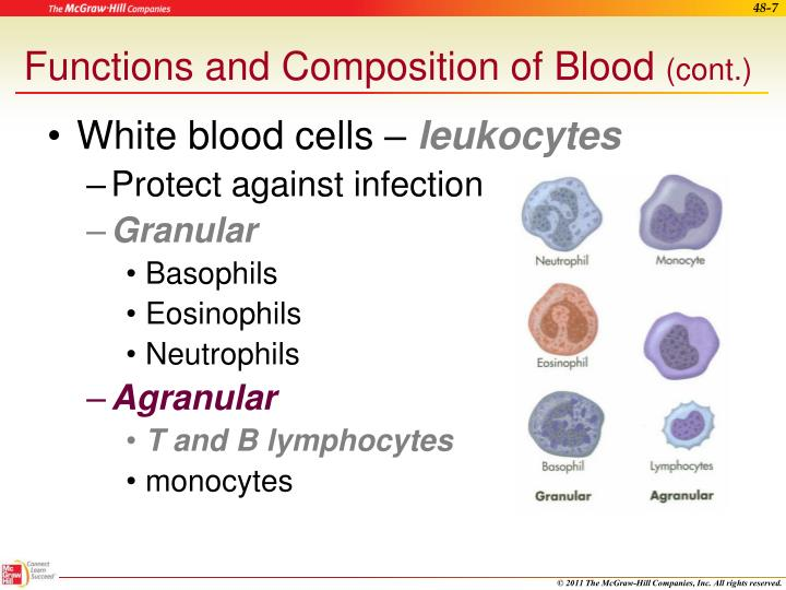 White blood cells –