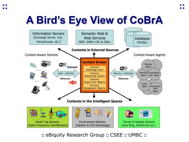 A Bird's Eye View of CoBrA